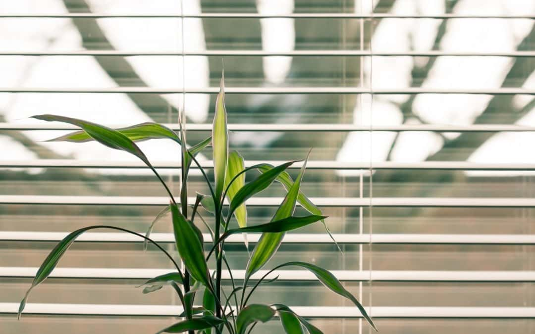 Roller Blinds Vs Venetian Blinds, Which Are Better for Your Home?